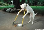 dog-doing-his-own-chores.jpg